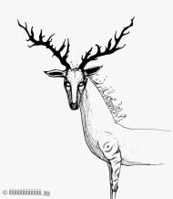 #3 The Deer